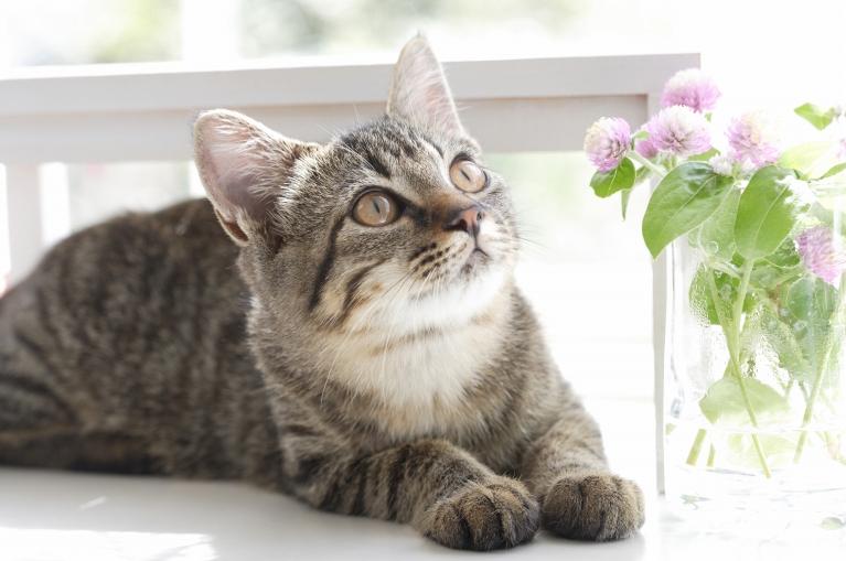 猫白血病ウイルスワクチン